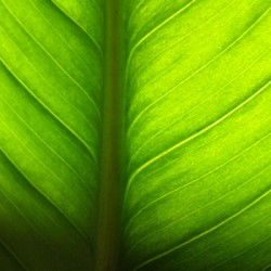Wikeo et l'écologie